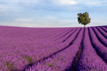 137212_avignon_lavendertours_3318